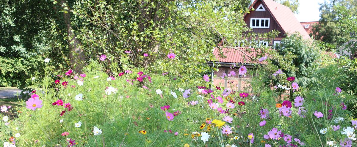 Frühling Blumen und Fachwerkhaus